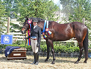 New Vocations to Host 10th Charity Horse Show