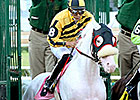 Mahubah's Corner: White Thoroughbreds