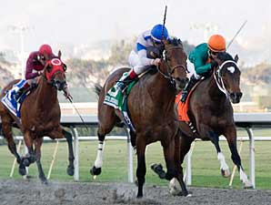 Chocolate Candy Impressive in Cal Derby