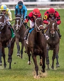 Chocolate Ride wins the 2016 Colonel E. R. Bradley Handicap.
