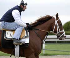 Pletcher Horses Arrive at Pimlico