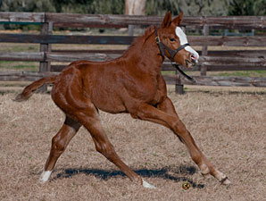 Circular Quay Sires First Foal