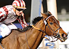 Cirrus Des Aigles Makes Fourth Champion Start