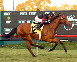 Grade I Winner Citronnade Euthanized