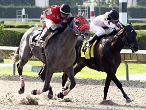 City Of Weston wins the Big Drama Stakes.