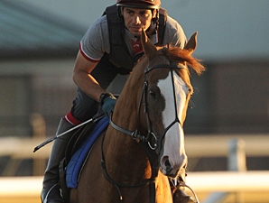 Cityscape works toward the Woodbine Mile.