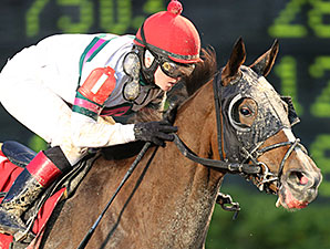 Class Included wins the 2013 Treasure Chest Stakes.