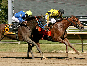Classy Coco wins the 2013 Dr. Teresa Garofalo Memorial Stakes.