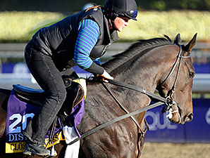 Close Hatches - Breeders Cup - October 31, 2013