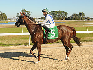 Cloud Scapes wins the 2014 Endeavour Stakes.