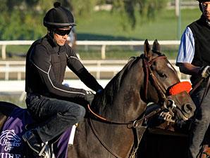 Cogito works at Santa Anita 10/29/2012.