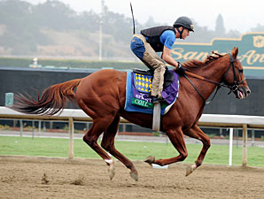 Coil - Breeders' Cup 2012
