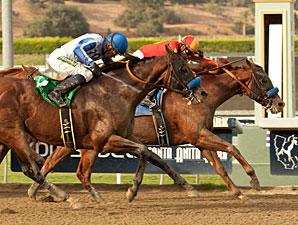 Coil wins the 2012 Santa Anita Sprint Championship.