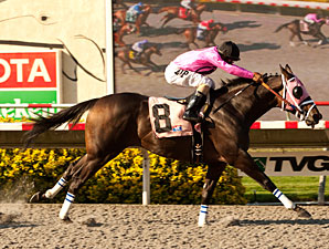 Comma to the Top wins the 2012 Pirate's Bounty Stakes.
