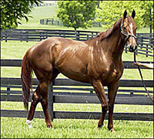 Congaree to Stud at Adena Springs Kentucky
