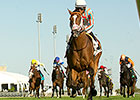 Conquest Enforcer Draws Off in Cup and Saucer