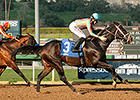 Conquest Two Step Euthanized After Injury