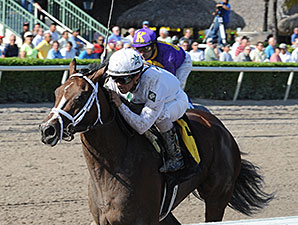 Constitution - Maiden Win, January 11, 2014.
