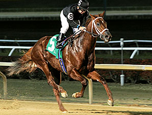 Cool Cowboy wins the 2014 Sophomore Sprint Championship Stakes.
