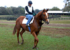 Racing Voices: The Fastest Horse in the World
