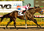 Grade I Winners Top Millions Sprint Divisions