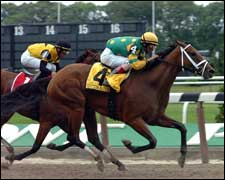 Grade I Winner Cotton Blossom Retired