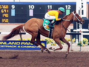 Countess Curlin wins the 2013 Island Fashion Stakes.