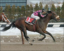 Old Pro Country Be Gold Wins Aqueduct 'Cap