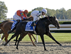 Nine Likely for Starlet