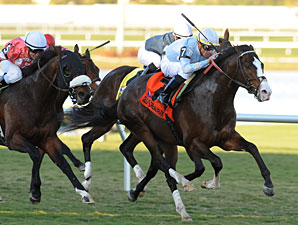 Courageous Cat, Wasted Tears Win Gulf Stakes