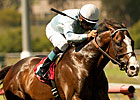 Courageous Cat Favored in Woodbine Mile