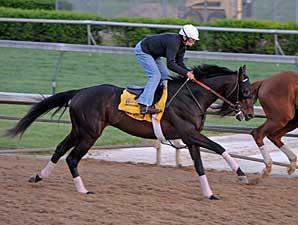 Mott Horses on Track