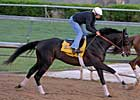 Mott Horses on Track