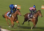 Cox Plate: Rob Heathcote -  Buffering