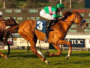 Cozi Rosie Heads Well-Matched Santa Barbara