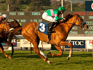 Cozi Rosie wins the 2011 Buena Vista Handicap.