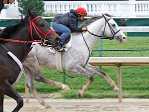 Cozzetti Heads Preakness Works at Churchill