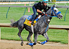 Trainer: No Plans to Scratch Creative Cause