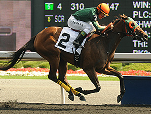 Cryptic Message wins the 2012 Nandi Stakes.