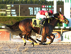 Csaba and Ducduc dead heat in the 2012 Fred W. Hooper.