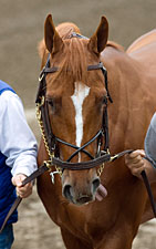 Padua's Interest in Curlin Acquired