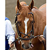Padua&#39;s Interest in Curlin Acquired