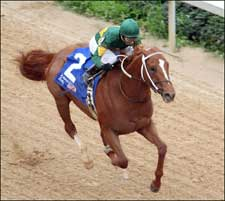 Curlin Favored at 7-2 in Final Derby Pool