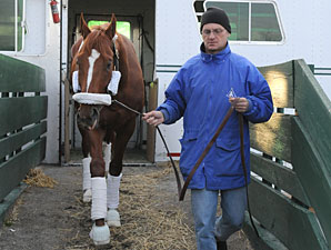 Curlin arrives at Belmont Park.
