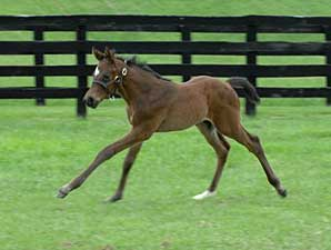 Full Brother to Curlin is Foaled