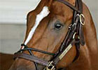 Curlin Heads Asmussen Workers at Saratoga