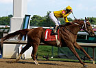 Stiff Test Set for Curlin in Turf Debut