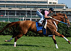 Curlin in Final Prep for Turf Debut