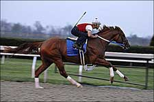 Asmussen-Trained Curlin, Zanjero, Reporting for Duty Continue Working Toward Derby