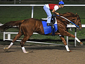 Curlin Works at Fair Grounds